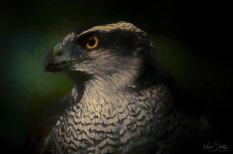 Eagle  - Ik blijf het geweldig vinden mijn foto's digitaal te schilderen in Photoshop. Heerlijk rustgevend om te doen en ik hou van het resultaat