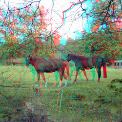paarden Hoge Veluwe 3D
