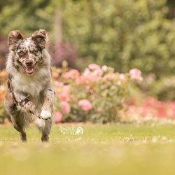 Qi'ra running
