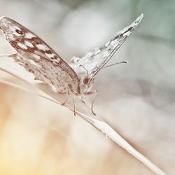 Nature Art 2011 - 18