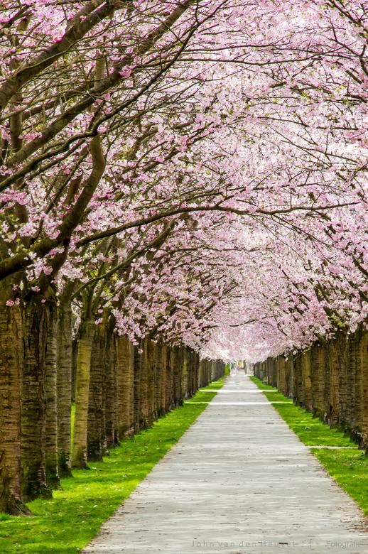 Blossom lane - Prachtige voorjaarswandeling