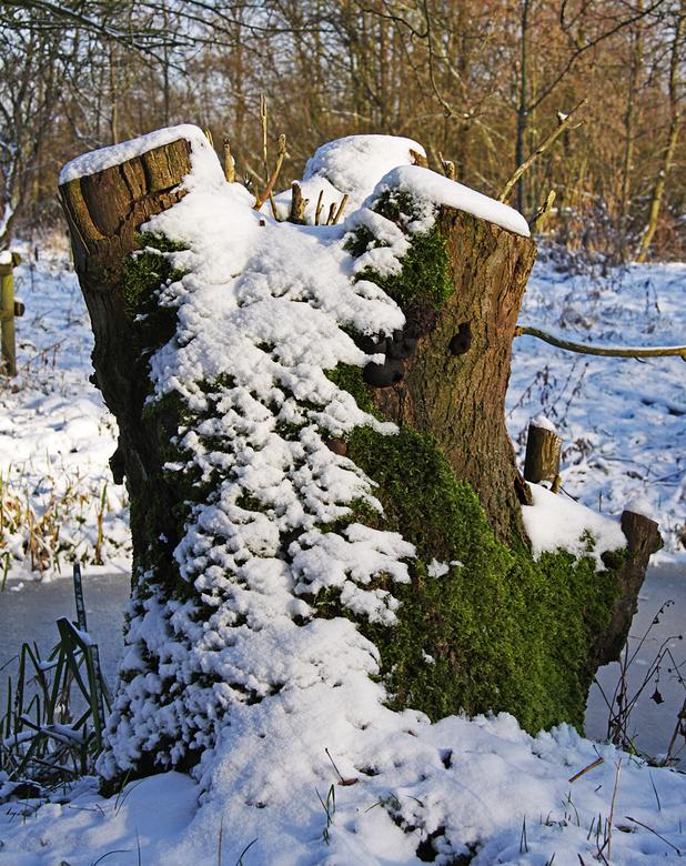 Afscheid, voor hoe lang? - Terwijl het buiten regent, zit ik achter mijn PC nog na te genieten van de afgelopen dagen met sneeuw en lekker veel foto&#