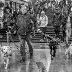 Waar laat je je hond uit wanneer het regent....?