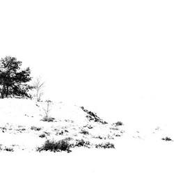 Vliegden in de sneeuw
