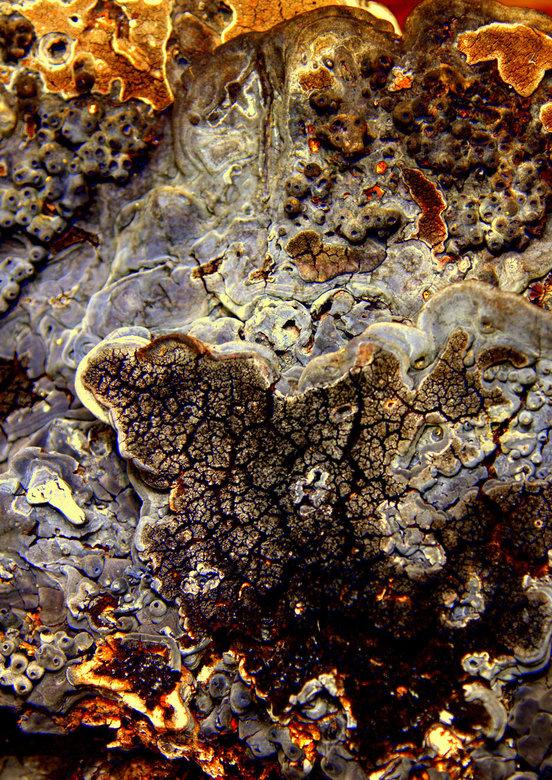 zwam - onderkant van een al jaren oude zwam, ik vond de natuurlijke vorm fantastisch