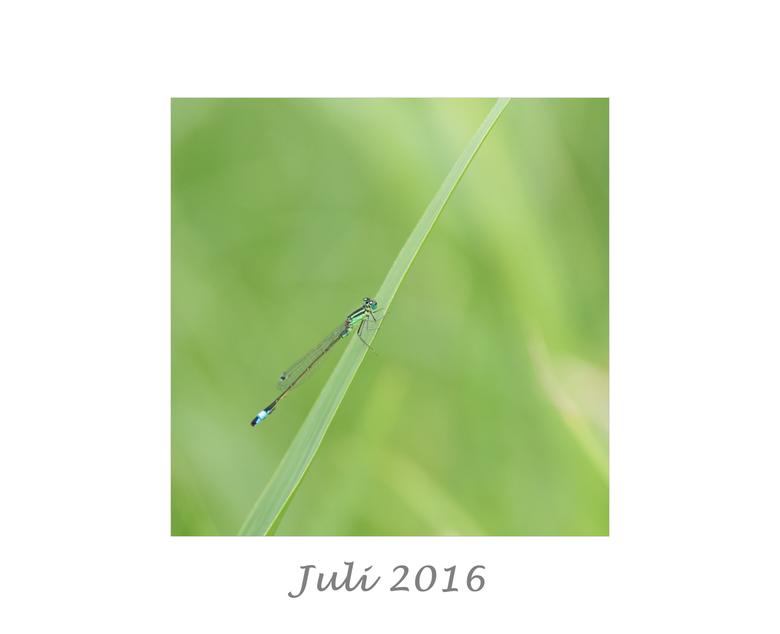 Juli - Jaaroverzicht 2016<br /> Juli