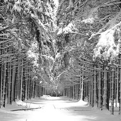 Winter in Ardennen