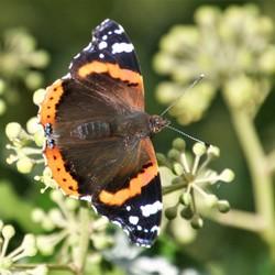 vlinder (3)
