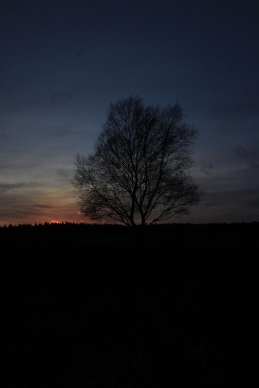 boom bij zonsondergang  - de foto is gemaakt op de Ginkelse heide in Ede <br /> <br /> groeten Gerben