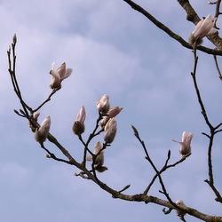 Het voorjaar komt er aan….