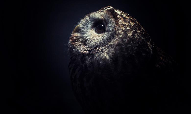 In the dark - Een paar test foto's gedaan met luna de bosuil