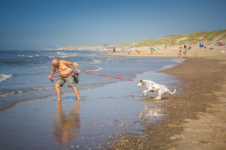 Wedstrijd - Wie gaat het winnen, de man of de hond. Het was een leuk gezicht om de fotogenieke man te zien, die zijn krachten mat met de dalmatiër.