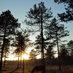 ondergaande zon in het bos