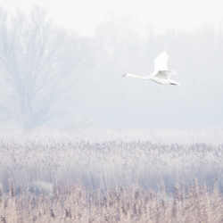 Misty Biesbosch