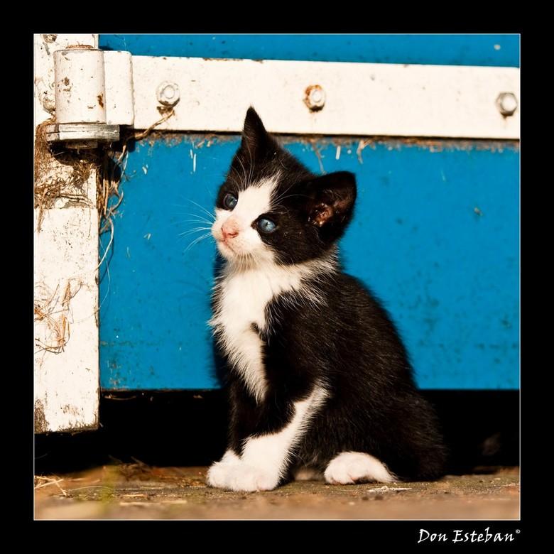 Boerderij kitten - Kitten zit bij te komen van alle indrukken van de boerderij