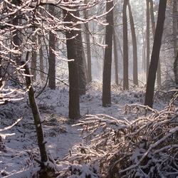 In het bos........in het bos....