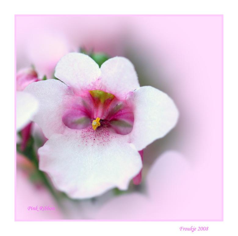 Pink Ribbon - Ook nog maar weer eentje voor het roze lint <br /> Groetjes Froukje