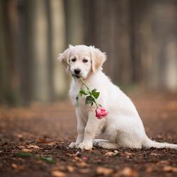 Wie wil mijn Valentijntje zijn?
