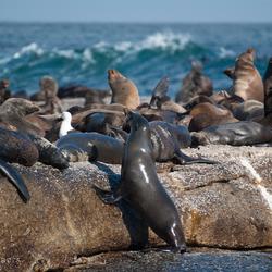 Zeehonden eiland