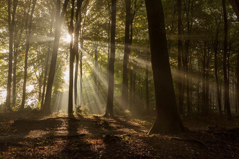 stralen in het bos - de combinatie opkomende zon en mist geeft een fantastiche entourage om mooie fotos te maken.