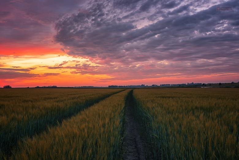 Damn those Sky's - Enkele weken geleden kleurde de lucht fantastisch mooi dus veerde ik op van de bank om snel met de auto richting dit graanveld te r