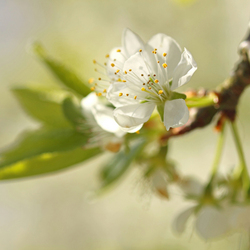 lentesfeertje vandaag
