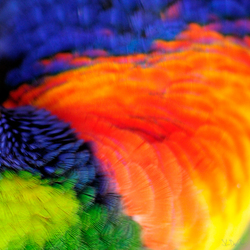 colorfull feathers