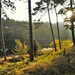 Ondergaande zon in de bossen van Burgh Haanstede