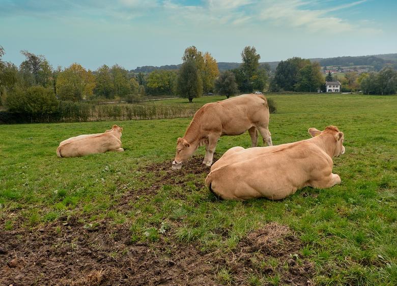 Geuldal 8. - Het Geuldal in Zuid-Limburg is een prachtig heuvellandschap om te wandelen doet zelfs buitenland aan met vakwerkhuisjes, watermolens,  we