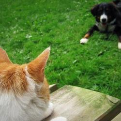 Als kat en hond