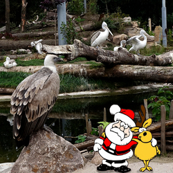 Kerst in snavelrijk