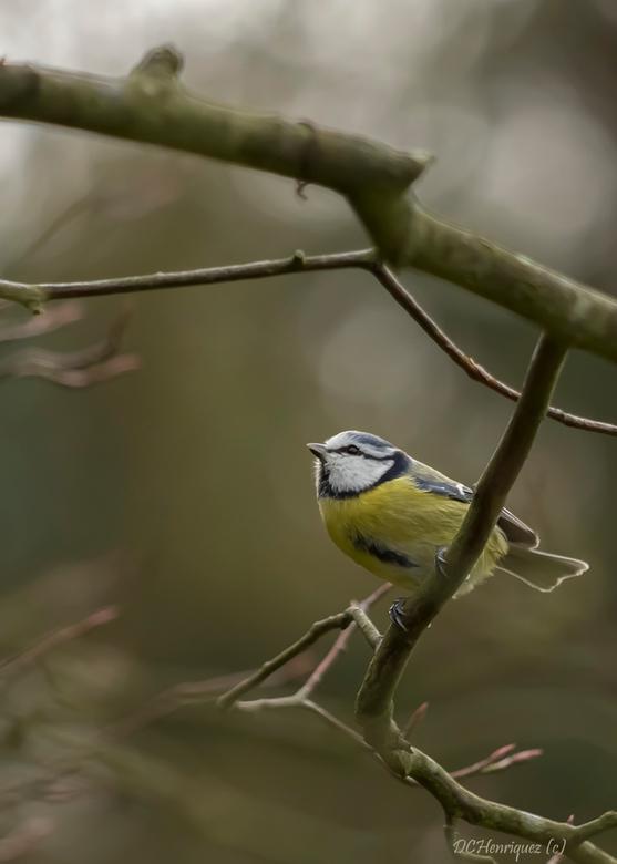"""Just hanging around! - Zelfs vogels kunnen soms zitten mijmeren  <img  src=""""/images/smileys/smile.png""""/><br /> <br /> Bedankt voor de fijne reacties"""