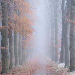 (Mist)erieus