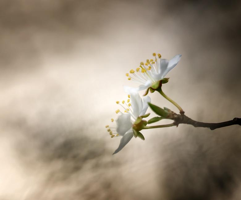 Blossom - Gewoon wat bloesem aan een boom, maar wat een mooie bloemetjes zijn het. De natuur trakteert ons op mooie vormen. Dank voor jullie reactie&#