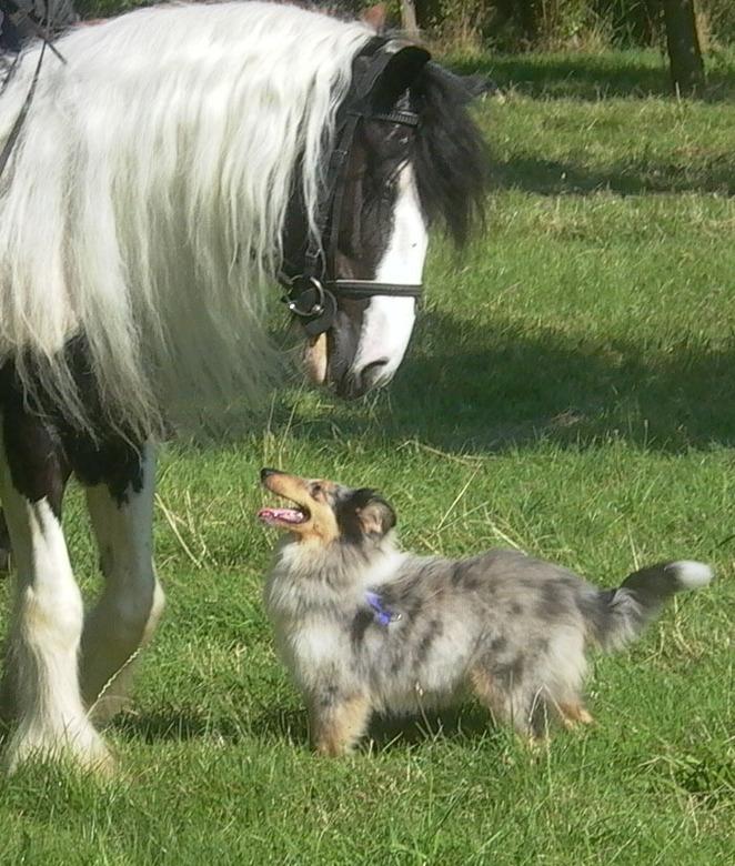 Mijn paard Kenan en hond Guya - Mijn paard Kenan en hond Guya