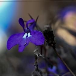 Het alleenstaande bloemetje