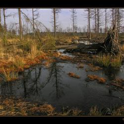 Natuurpark Dwingelderveld