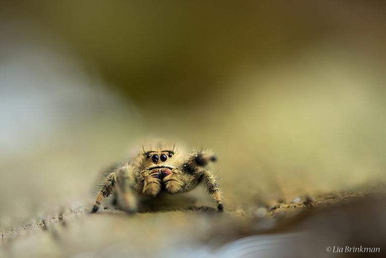 itsy bitsy spider  - itsy bitsy spider <br />