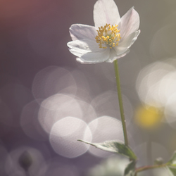 Sparkling spring