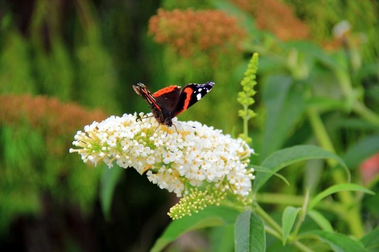 Butterfly - Deze foto is gemaakt bij de Floriade in Venlo.