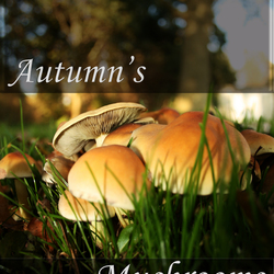 Autumn's Mushrooms