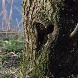 Mijn houten hart