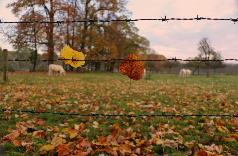Colors of Autumn - De ochtendstond heeft goud in de mond en niet alleen .....