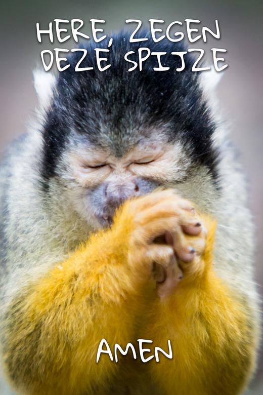 HERE, Zegen deze spijze, Amen. -