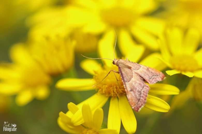 Vlinder  - Een vlinder op bloem