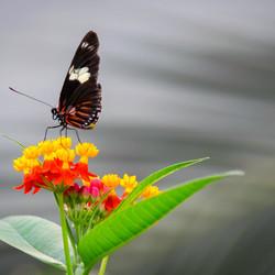 Contrast zwarte vlinder op een kleurrijk bloemetje vond ik wel erg mooi
