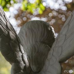 Earned wings
