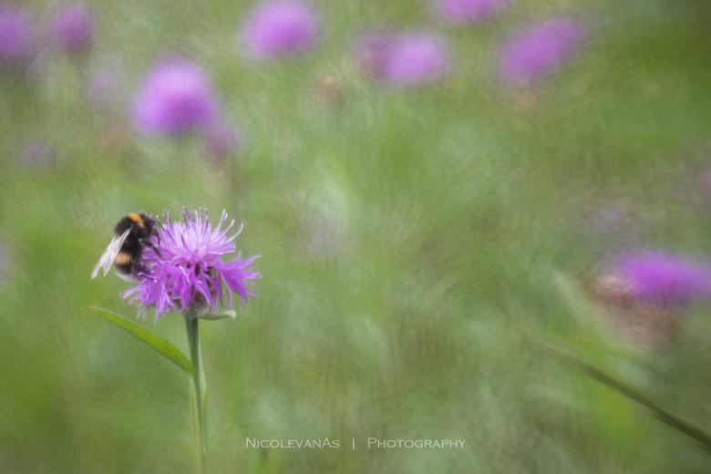 Hommeles. - Spelen in een veld met wilde bloemen.  Lensbaby composer pro met de double glass optic en macro converter 4 mm.<br /> Creatief apperture