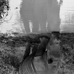 Rhino Reflexion