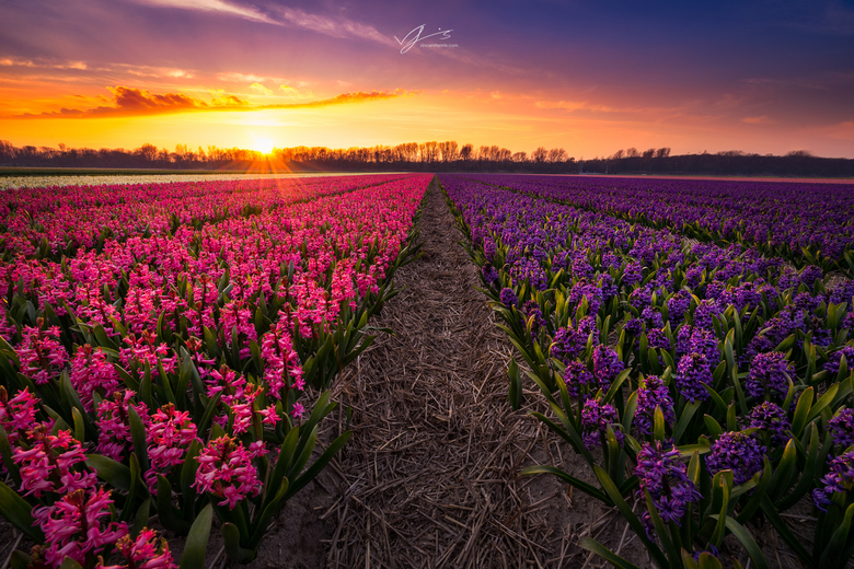 Spring fields 2.0 - Hier nogmaals een foto tijdens 1 van mijn tripjes langs en door de bollenstreek. Eigenlijk hetzelfde  plekje als mijn laatste uplo